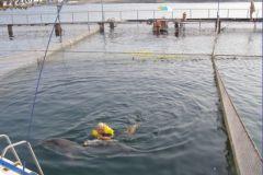 Плавание с другом