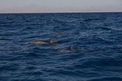 Тем утром дельфины были очень расположены к контакту...