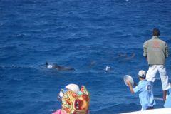 Дельфины любопытны к звукам и команда шхуны привычно устраивает «шум»