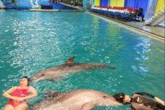 Ультразвуковое воздействие дельфинов на мозг